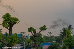 Battambang-5148