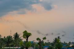 Battambang-5155