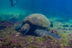 Galapagos-1452
