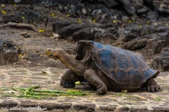 Galapagos-2219