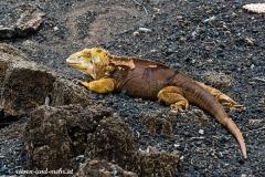 Galapagos-2236