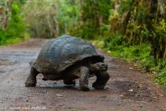 Galapagos-2370