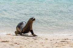 Galapagos-3055