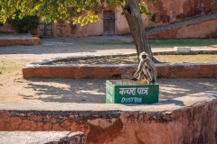 Jaipur-2513