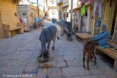 Jaisalmer-3100