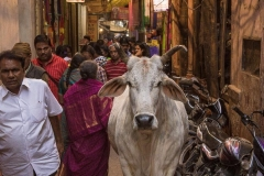 Varanasi-3645