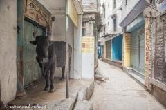 Varanasi-3788