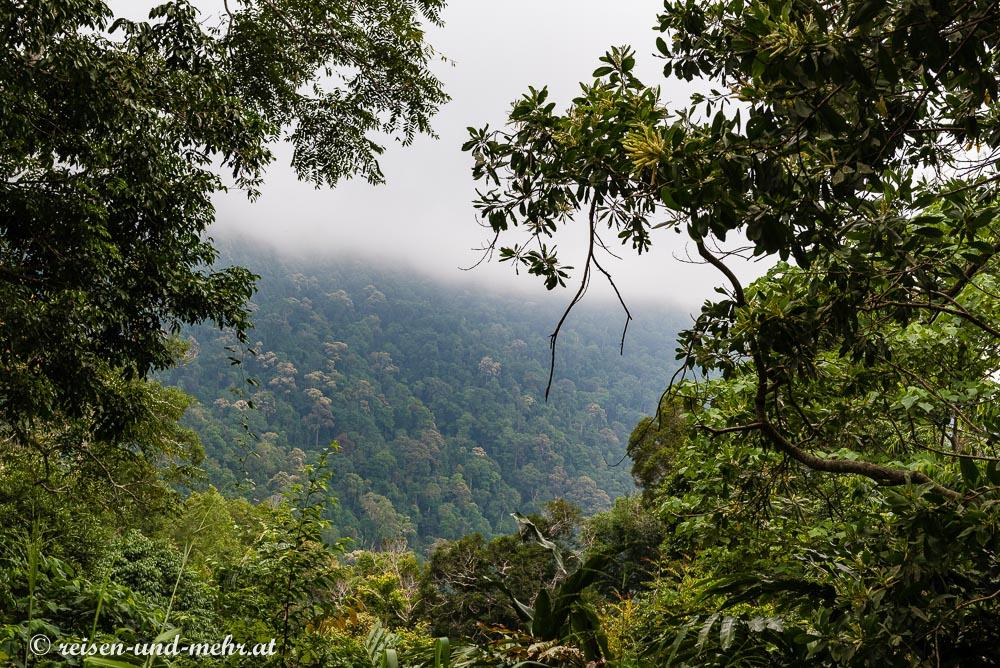 Regenwald am Gunung Raya, Langkawi