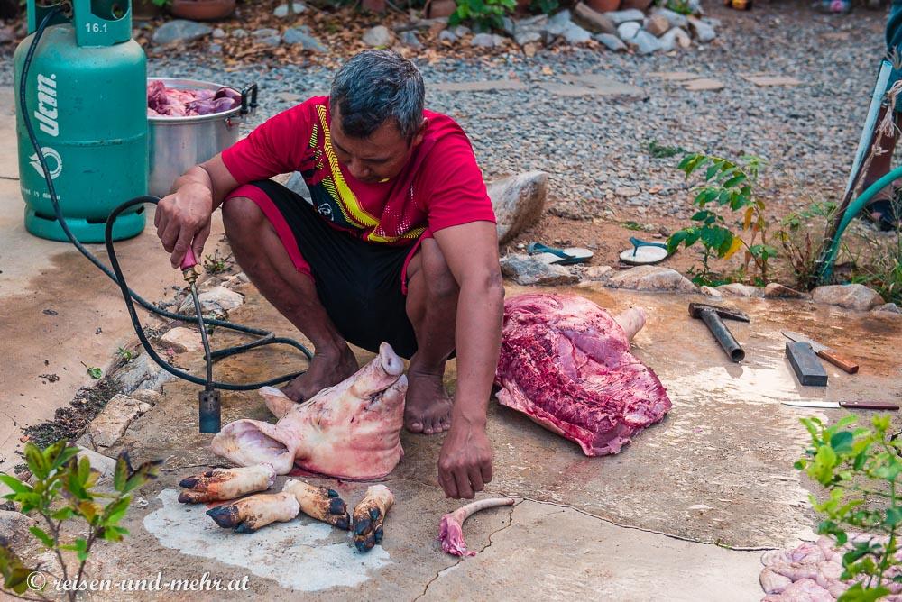 Flämmen eines geschlachteten Schweines, Pak Chong, Thailand