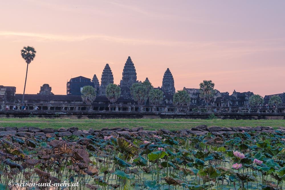 Angkor Wat bei Sonnenaufgang am Seerosenteich, Siem Reap, Kambodscha