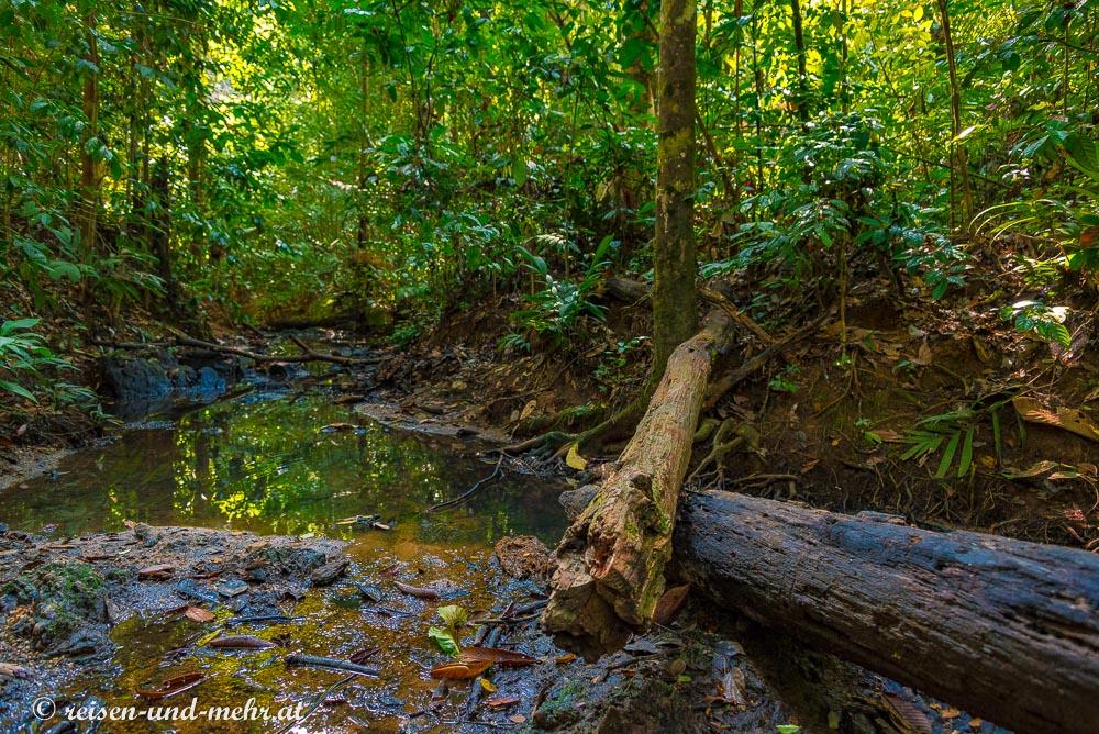 Schlammloch im Taman Negara Nationalpark das uns als Badezimmer diente