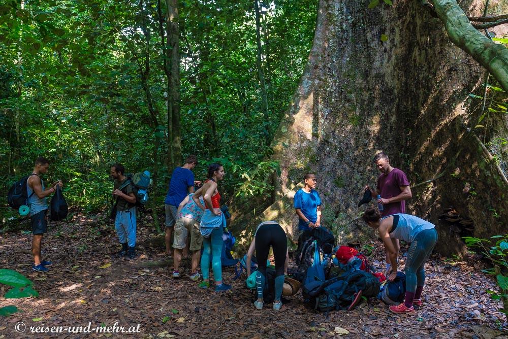 Kurze Verschnaufpause unter einem Baumriesen, Taman Negara Nationalpark
